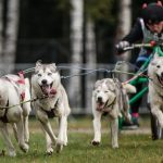 Чемпионат и Первенство России по ездовому спорту (бесснежные дисциплины)