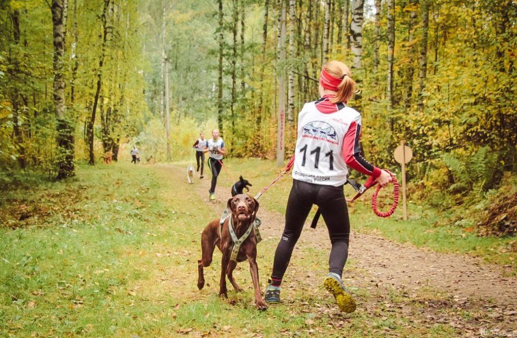 Чемпионат и Первенство России по ездовому спорту (бесснежные дисциплины) 2019