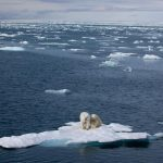 Вебинар ASM3 ( из третьей Серии Министерских Вебинаров по Арктической Науке). Основная тема вебинара: «Укрепление понимания и потенциала прогнозирования арктических экологических и социальных систем и их глобального взаимного  воздействия».