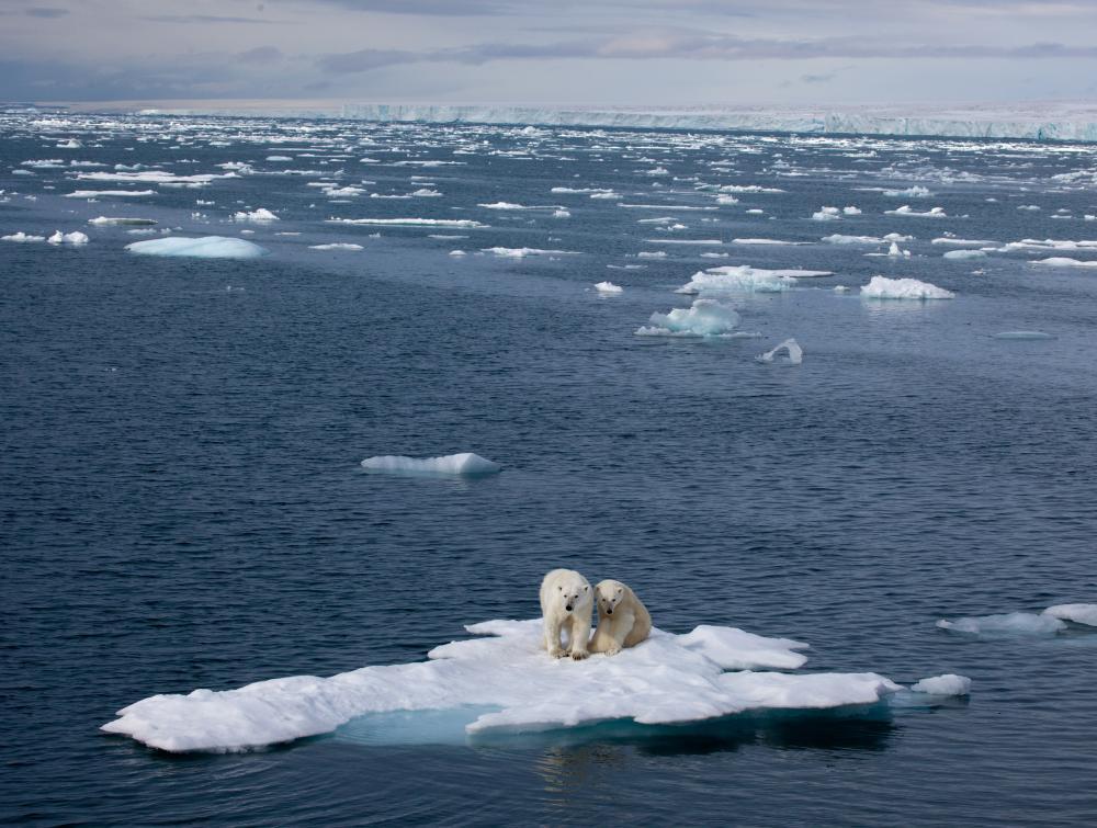 вебинар ASM3 ( из третьей Серии Министерских Вебинаров по Арктической Науке)