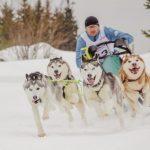Ежегодный Чемпионат и Первенство России по ездовому спорту при поддержке РГГМУ